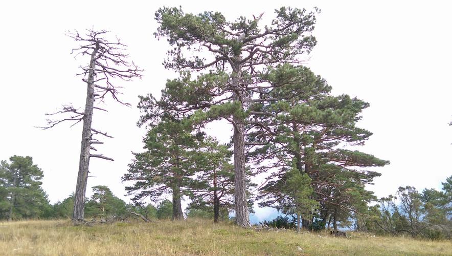 Estudios y seguimientos de hábitats naturales