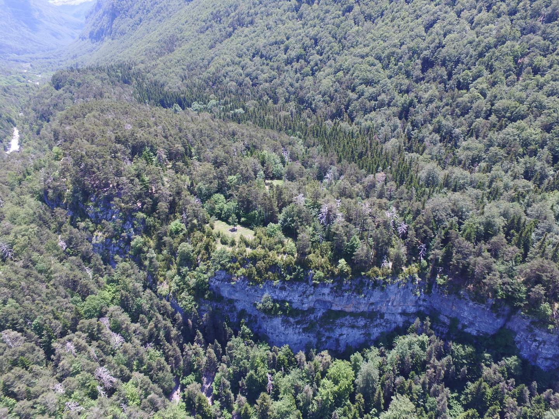 Estudiem al detall l'estructura i dinàmica del bosc