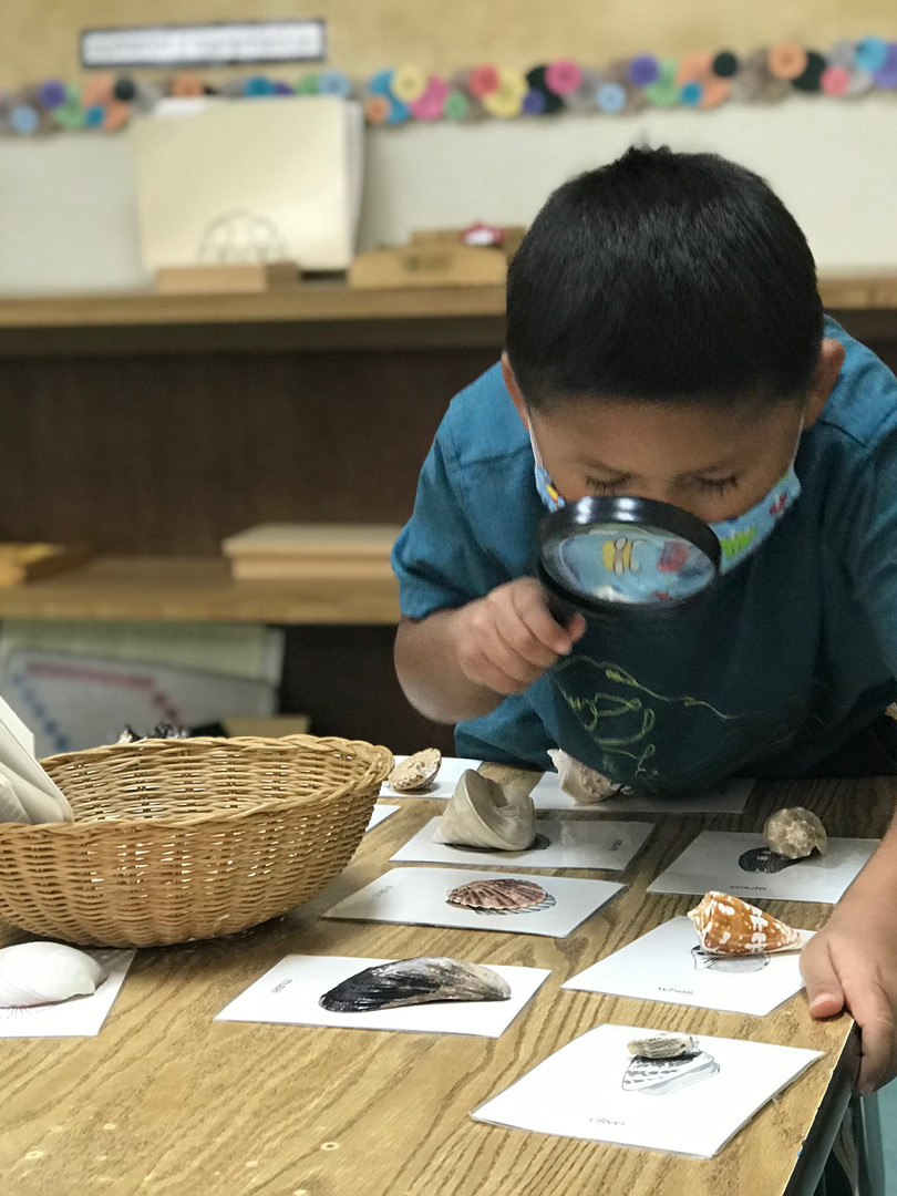 Primary Science and Nature