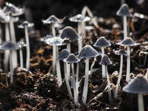Alana e os Cogumelos