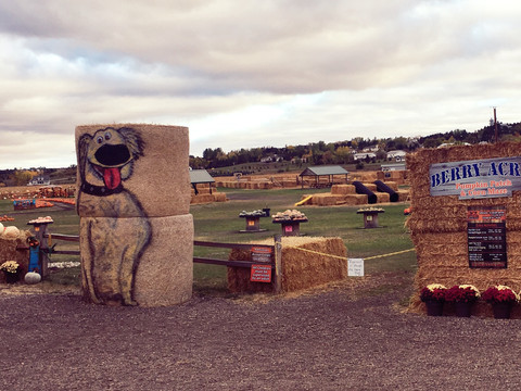 Berry Acres Pumpkin Patch is a Fall Festival and Family Tradition