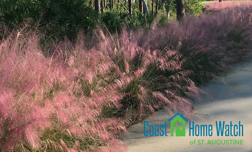 ornamental grass is an easy option for landscaping for snowbirds