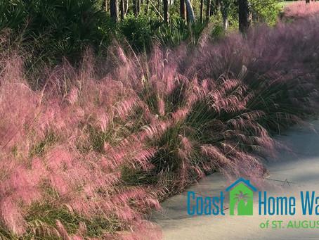 Easy Landscaping Option for Snowbirds - Ornamental Grass