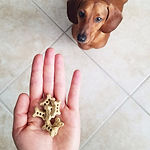 dachshund, dog treats, natural dog treats