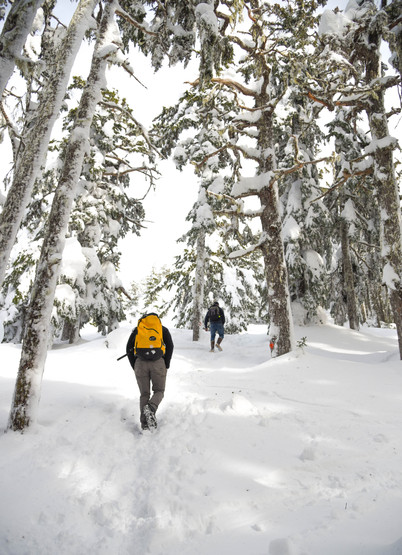 Hiking Verstovia