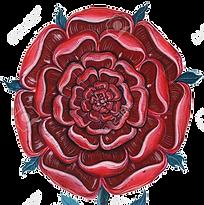 47805196-gouache-illustration-of-rose-ma