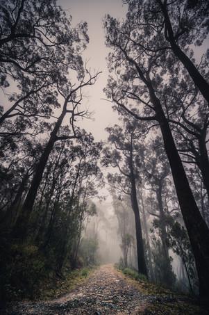 Mt lofty Ranges Fog