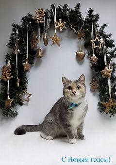 Стрижка кошек на семеновской