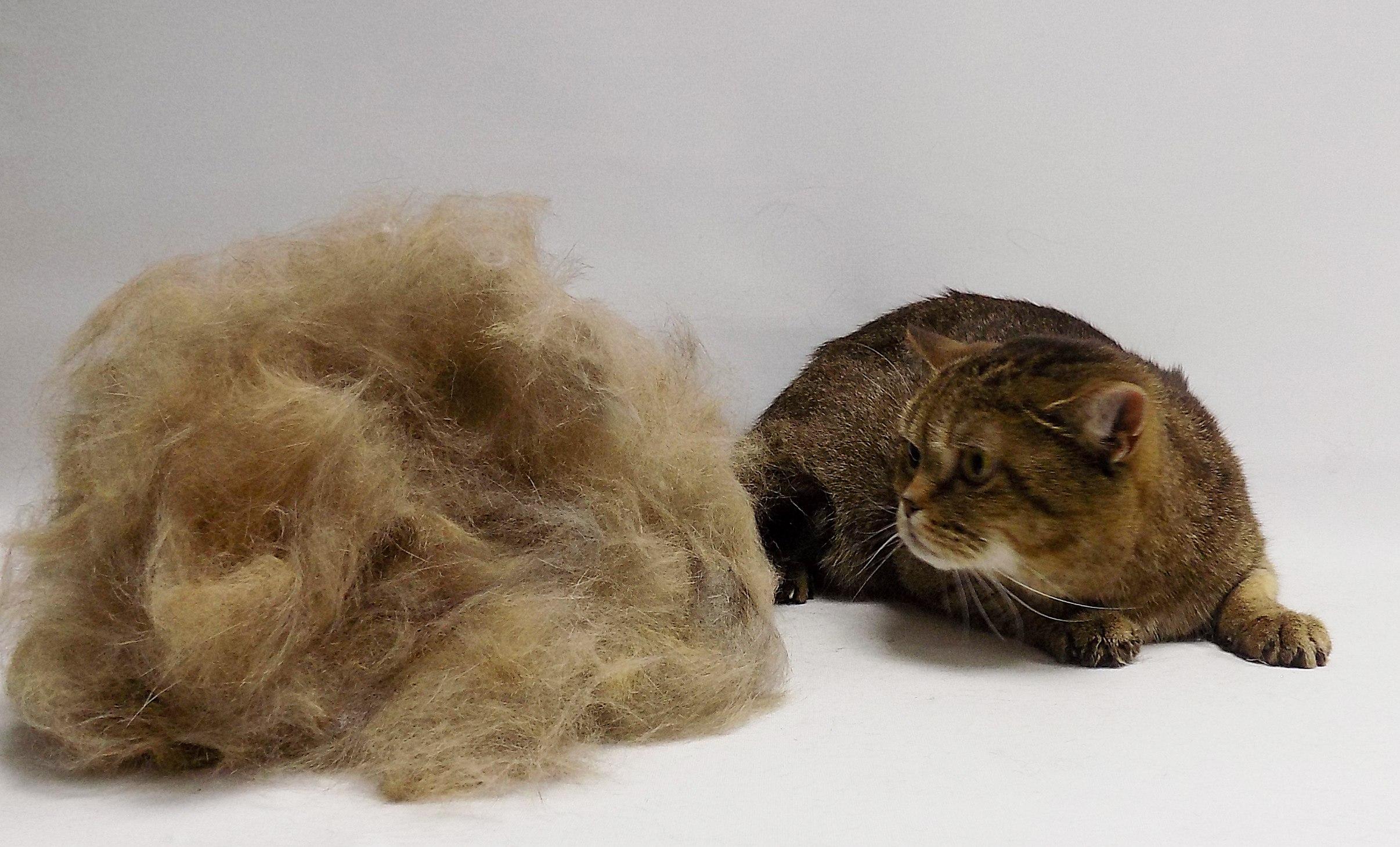 помыть и вычесать кота