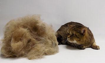 стрижка кошек в сокольниках