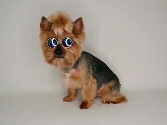 стрижка собак на черкизовской