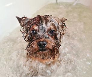 озонотерапия для собак