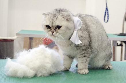 Помыть и вычесать кошку