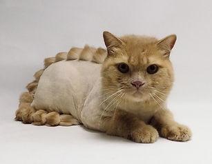 стрижка кошек на преображенской