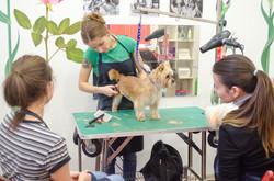 Где научиться стричь собак