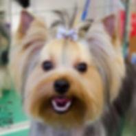 Чистка зубов ультразвуком собакам без наркоза
