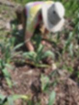 Brit planting sunflowers.jpg
