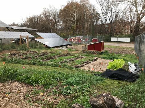 garden with solar panels.jpg