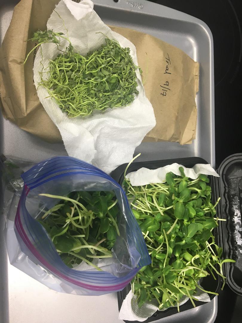 Bagging the Microgreens