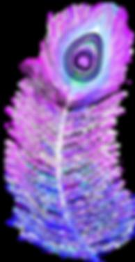 Plume_de_paon_Caïs_basse_qualité.png