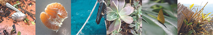 A series of photographs of plants and textures as well as objects