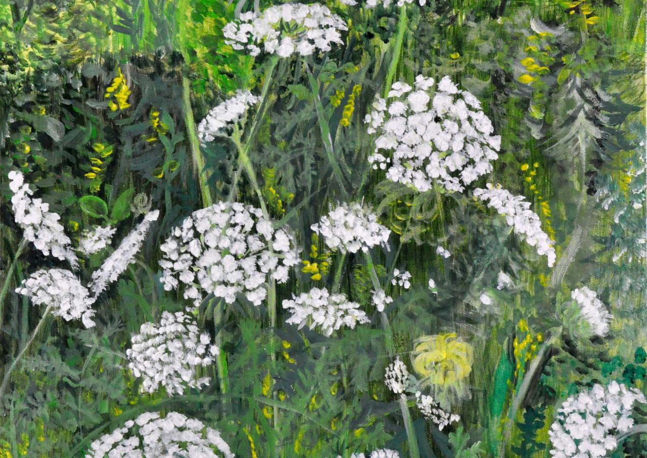 Queen Anns Lace (Daucus Carota) (2019), Acrylic on canvas, 16x20