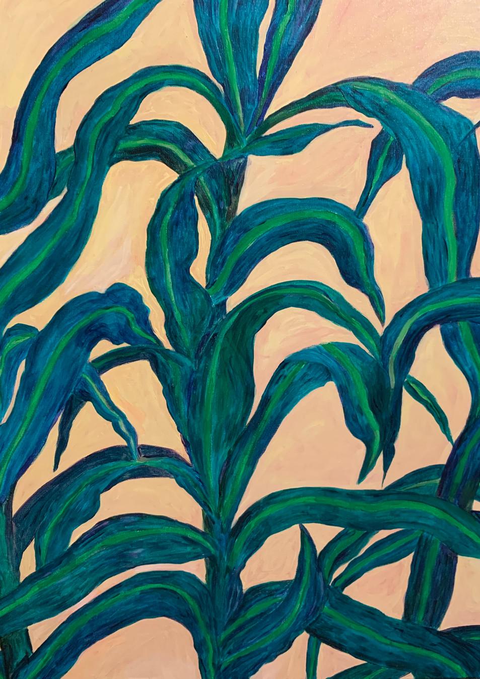 Illumination (2020), Acrylic on canvas, 36x48