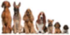 dogs, companion, i26, supplement, pets, digestive, immune, chewable