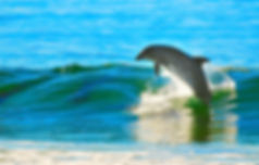 dolphin-1679468_1920.jpg