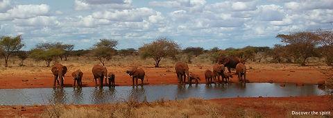 safaris Kenya.jpg