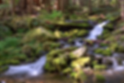 Olympic Moss Stream  copy.png