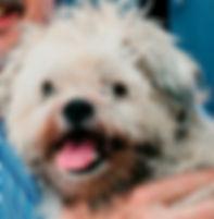 Webster, cuddly canine