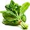 Thumbnail: Palak (Spinach)