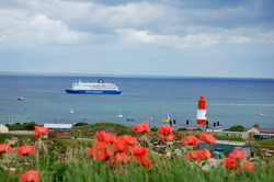 Poppys and Souter Lighthouse