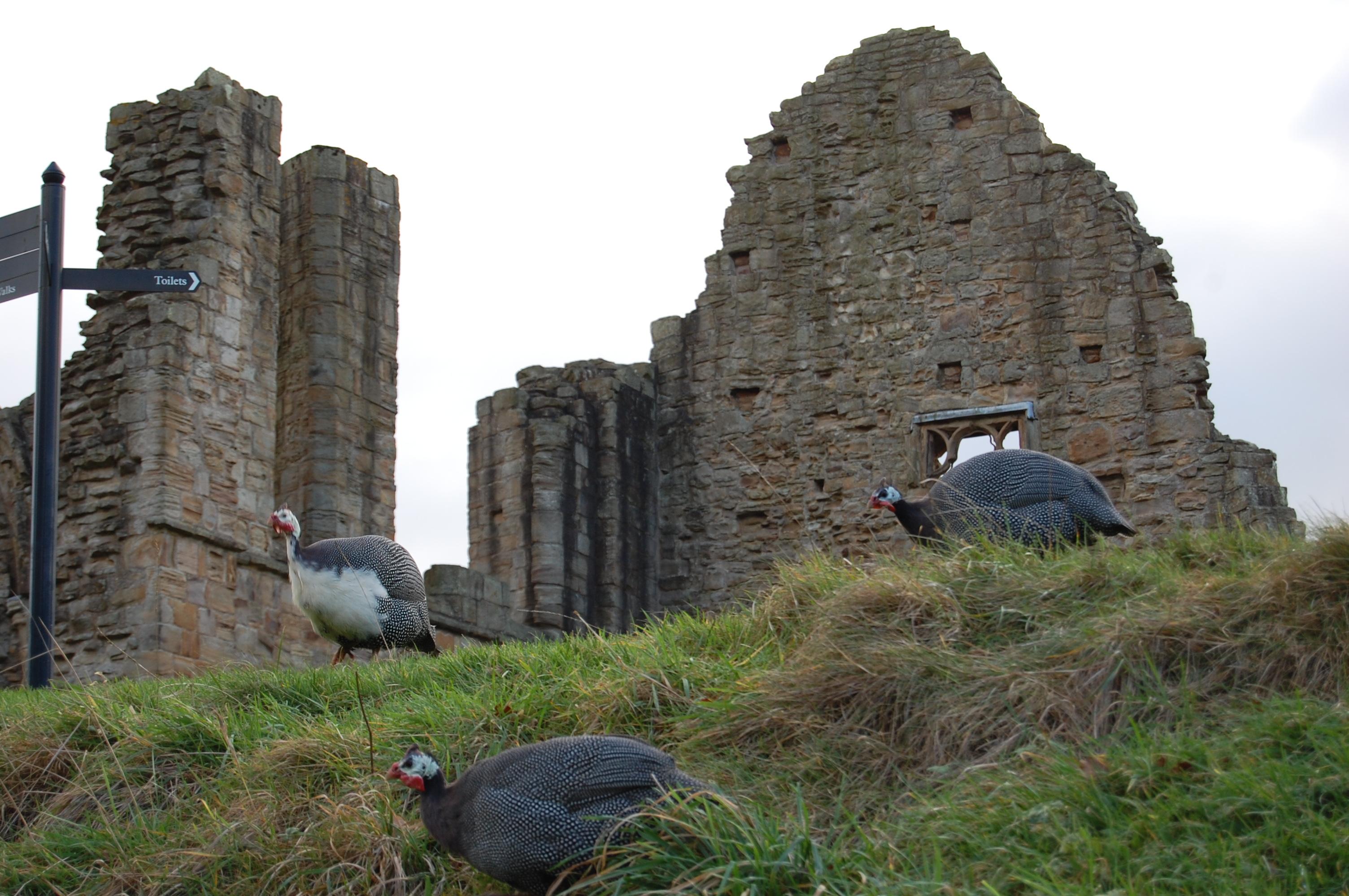 Finchael Abbey Ruins