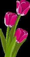 tulips-2923492__480.webp