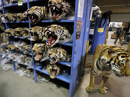 A Sit-Down With Former State Department Senior Advisor on Wildlife Trafficking: Jessica Graham