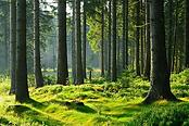 Forêt.png