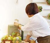 Sedamn/セダムン/多肉植物/おしゃれ/グリーン/インテリア