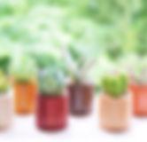 Sedamn/セダムン/woodcube/ウッドキューブ/多肉植物/おしゃれ/グリーン/インテリア