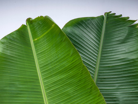 The Tale of the Famed South Indian Banana Leaf Plate