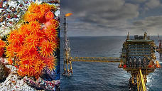 Risk of dissemination of the nonindigenous Orange cup coral from ship hulls and oil/gas platforms in the South West Atlantic