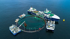 Biofouling management in New Zealand salmon farms: challenges and directions
