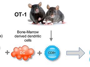 Improving Cytotoxic Immune Response in vitro and in vivo