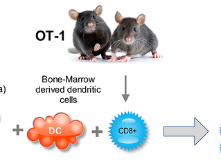Improving Cytotoxic Immune Response in vitro and in vivo