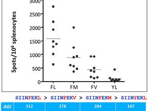 EpiQuest-T: Antigenicity index and epitope's immunodominance