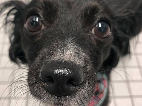 How To Train a Rescue Dog With Trauma