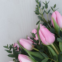 Pink tulips and Parvifolia