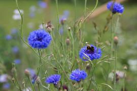 heathercroft-meadows-flowers-grateley-ha