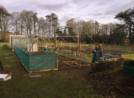 Exciting Developments in the New Polytunnel